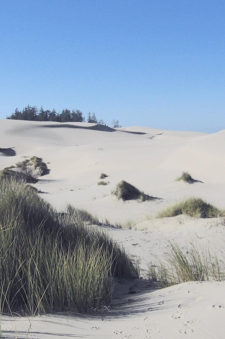 oregon-sand-dunes2